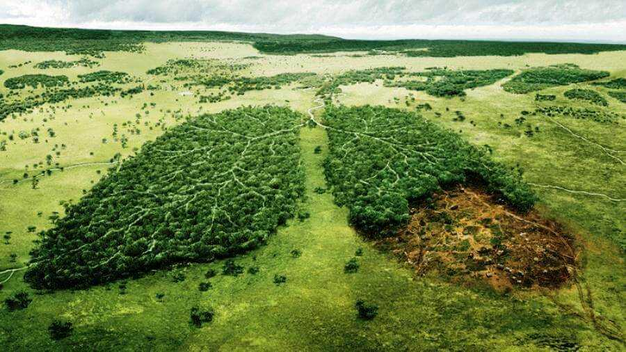 вырубка лесов влияет на наше сознание